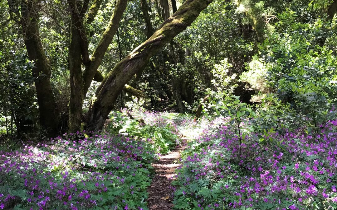 The healing power of forest bathing